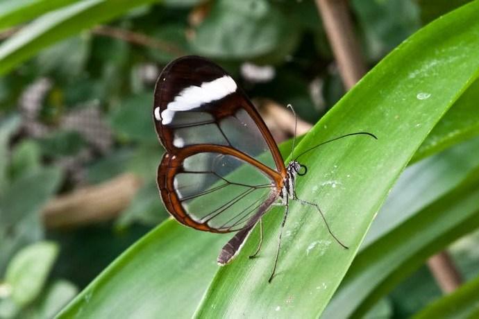 vlindertuin Knokke
