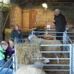 Kinderboerderij Hoeve Paepehof De Panne